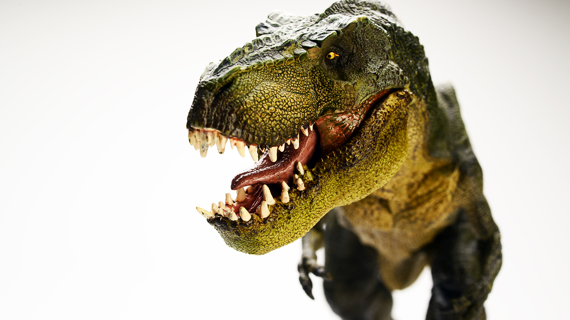 Dinosaurios | Question Digital